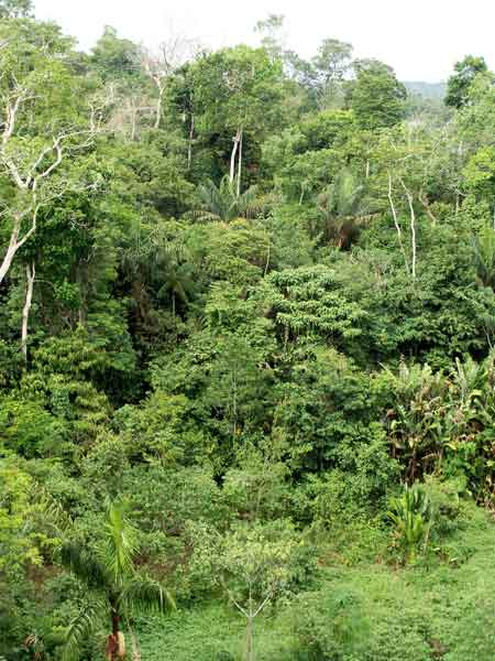 rainforest-canopy-manaus-brazil-small